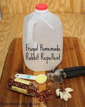 How to make your own rabbit repellent - frugal, DIY treatment