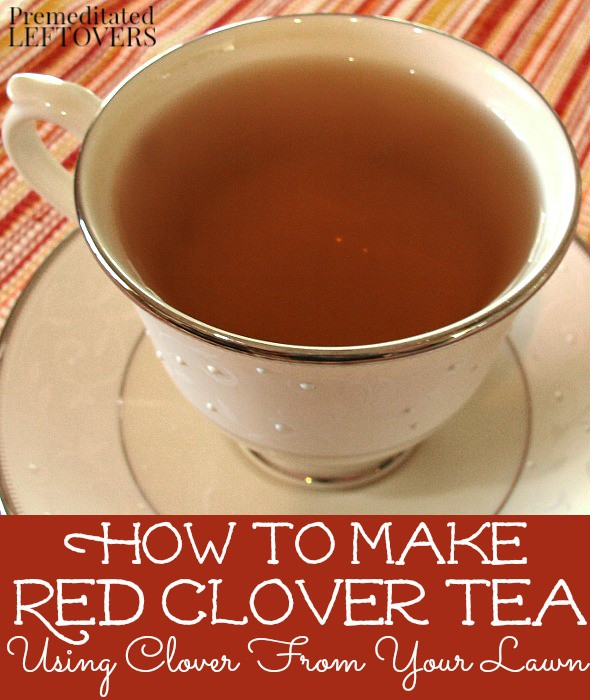 Quick and Easy Red Clover Tea Recipe - How to make red clover tea using fresh clover blossoms from your lawn.