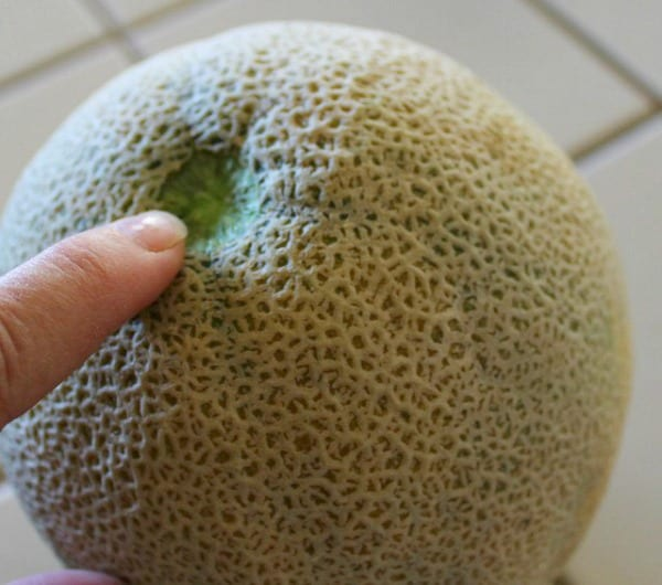 How to pick a cantaloupe that will taste good.