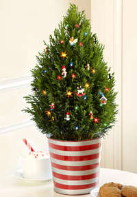 Christmas Tree and Truffles Sale from ProPlants.com