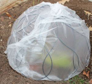 Invert a hanging basket, cover with plastic and use as a cloche