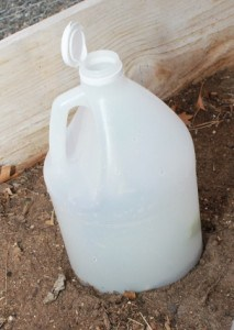 Use a vinegar jug as a cloche