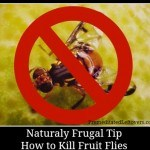 Naturally frugal tip - how to get rid of fruit flies