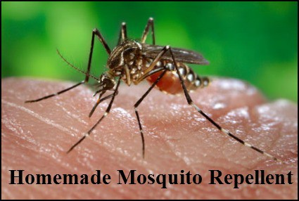 Naturally Frugal Tip: Homemade Mosquito Repellent