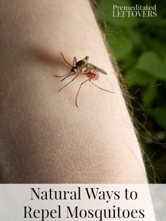 Natural & Homemade Mosquito Repellents - Natural ways to repel mosquitoes by using natural ingredients like lavender & vanilla extract to repel mosquitoes.