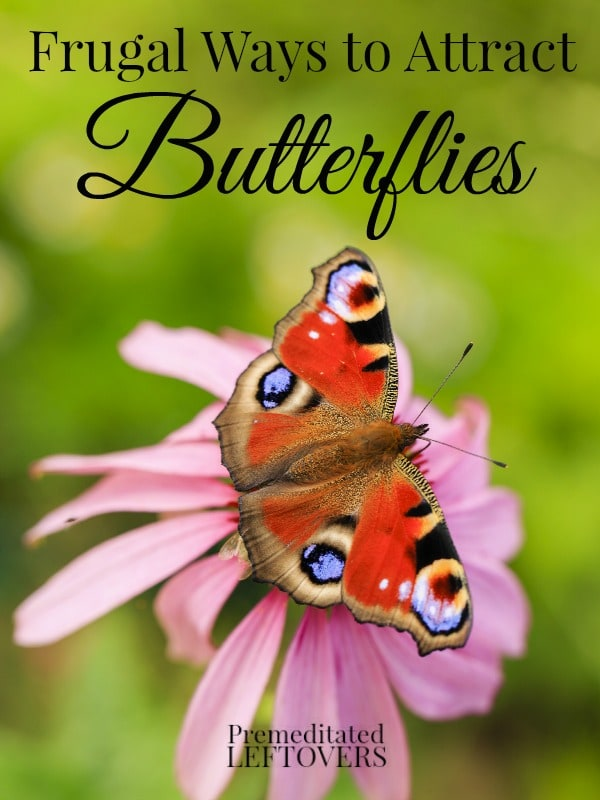 Bon 6 Frugal Ways To Attract Butterflies To Your Yard Including How To Attract  Butterflies To Your