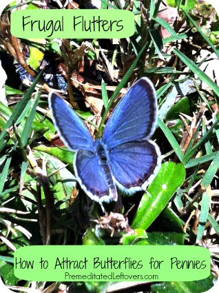 6 Frugal Ways to Attract Butterflies to Your Yard