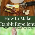 How to Make Rabbit Repellent - a frugal and easy homemade rabbit repellent recipe