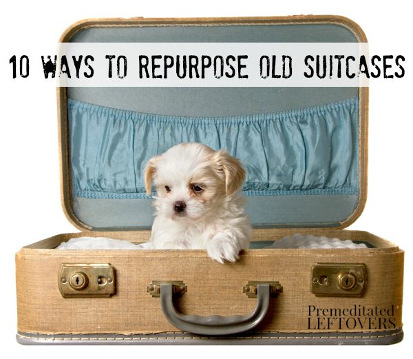 10 Ways to Repurpose Old Suitcases including make a pet bed for your dog or cat