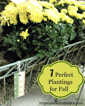 7 Perfect Plantings for Fall - Here are several flowers that you can enjoy this fall and bulbs that you should plant now to enjoy next spring.