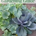 Fall Vegetable Gardening Guide - a list of vegetables to grow in your garden this fall