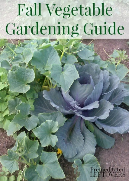 Fall vegetable gardening tips dan330 for Gardening 101 vegetables