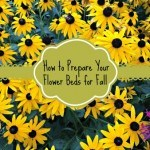 How to Prepare Your Flower Gardens in the Fall for Next Spring