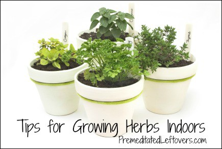 tips for growing an indoor herb garden  premeditated leftovers, Natural flower