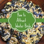 Tips for Attracting Winter Birds- Provide food and shelter for winter birds with these useful tips. You are sure to see some colorful visitors in your yard!