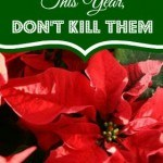How to Keep Your Poinsettias Alive This Year