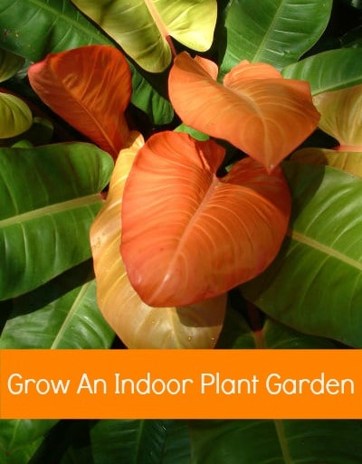 How to Start an Indoor Plant Garden - Tips for Caring for Houseplants