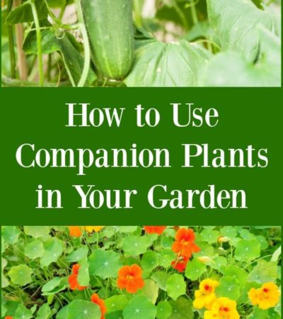 How to Use Companion Plants in Your Garden