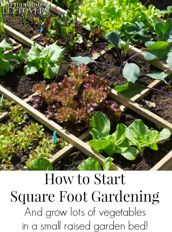 How to Start Square Foot Gardening- Learn how to grow a lot of vegetables in a small amount of space with the Square Foot Gardening method.