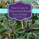 How to Care for Plants that Suffered from a Freeze