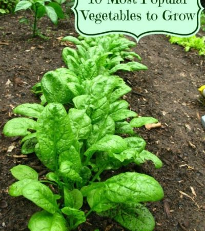 10 Most Popular Vegetables to Grow in a Garden