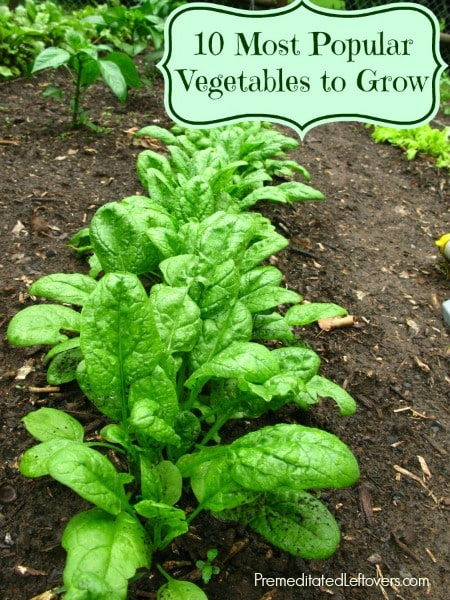 10 Most Popular Vegetables to Grow