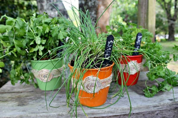 DIY Herb Pots Using Dollar Store Items