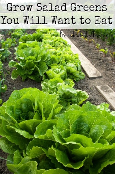 Grow Salad Greens You Will Want to Eat