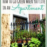 Eco-Friendly Apartment Living Tips – How To Go Green in an Apartment