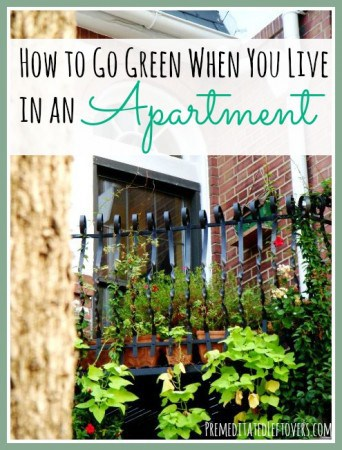 How To Go Green When You Live in an Apartment