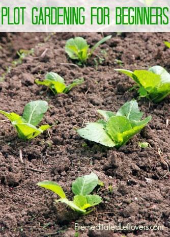 plot gardening for beginners