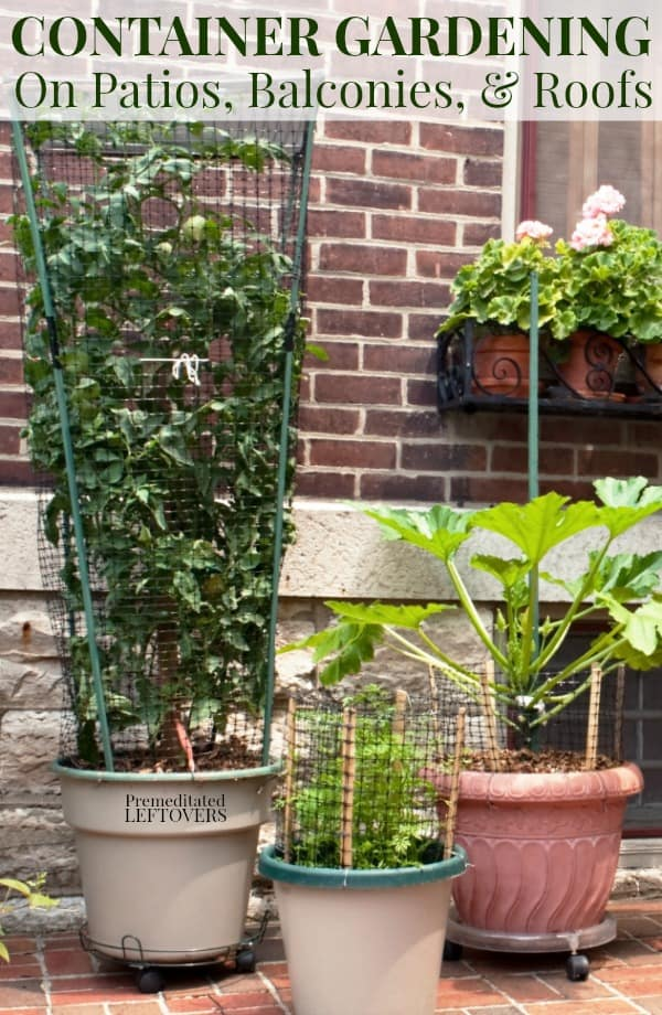 Vegetables growing on a patio. Flowers growing on windowsill planter. Tips for container gardening in small spaces like a patio, balcony or roof top garden