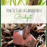 Frugal Gardening Tips: How to Start a Garden on a Budget: You can start growing your own garden without a lot of money. These frugal tips will show you how.