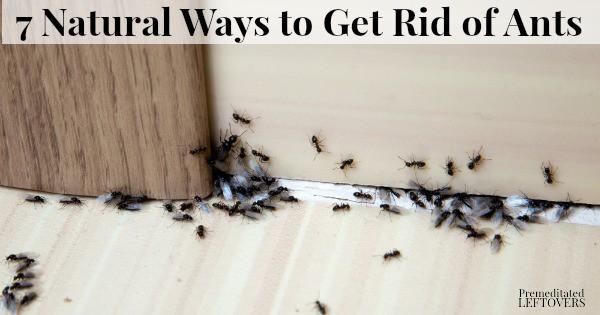 ants on floor in home