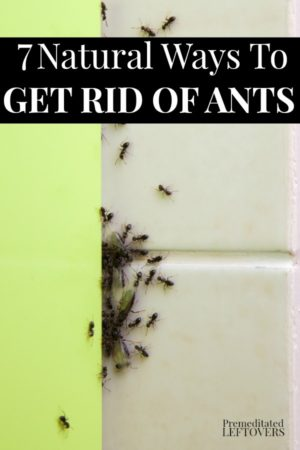 lots of ants on tile counter and wall inside home
