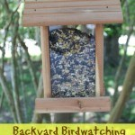 A fun and simple Backyard Birdwatching Unit Study for homeschoolers or as an enrichment activity for anyone.
