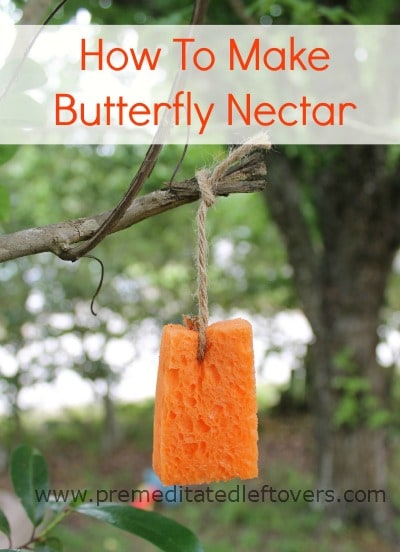 Sponge soaked in Homemade butterfly nectar recipe hanging from a tree branch to attract butterflies to this DIY butterfly food.