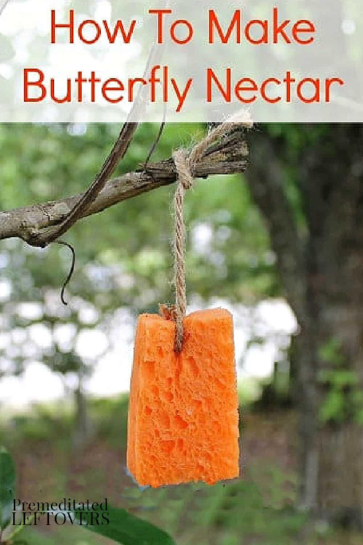 diy butterfly nectar recipe
