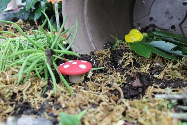 fairy garden mushroom
