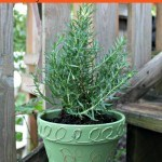 Thrifty Tuscan Charm: DIY Embossed Terra Cotta Pot - Turn a simple terra cotta pot into a more elegant planter for your indoor and outdoor plants.