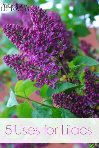 5 Uses for Lilacs