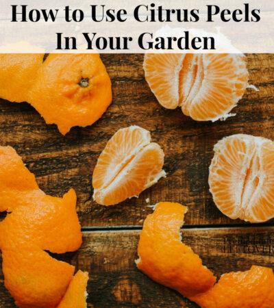 5 ways to use citrus peels in your garden