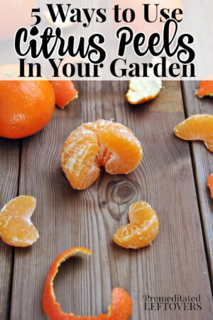 orange peels on a garden bench
