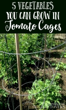 5 vegetables you can grow in tomato cages