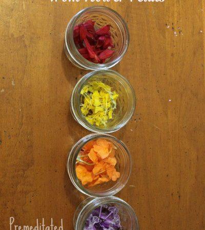 How to Make Watercolor Paints from Flower Petals - Making water color paints from flower petals is a fun craft for kids that can be used in art projects.