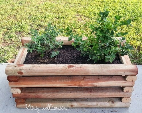 DIY Planter Box filled with Blueberries