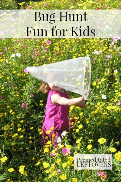 Bug Hunt Fun for Kids