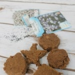 How to make DIY seed bombs