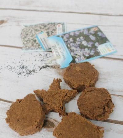 How to make DIY seed bombs