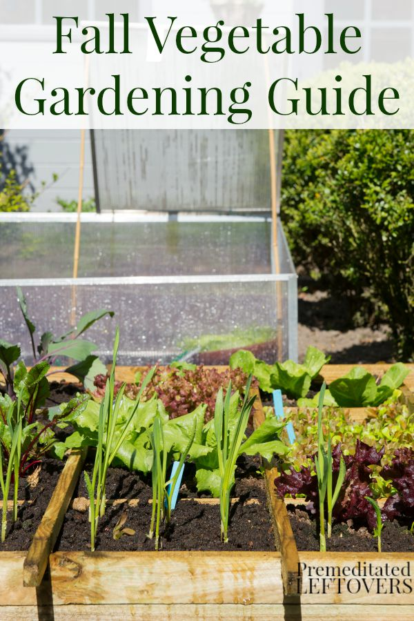 fall vegetable gardening guide extend your garden by growing vegetables in the fall plants - Fall Vegetable Garden